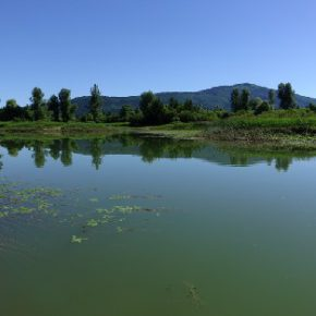 702 5 290x290 - Jezero usiha