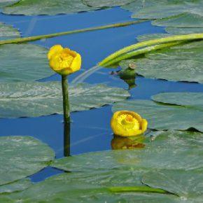 709 5 290x290 - Jezero skozi fotografski objektiv