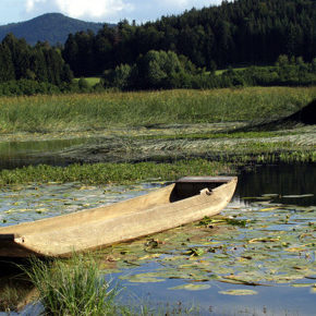 foto 1 290x290 - Photographies from Lake Cerknica