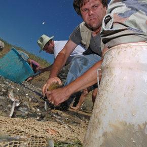foto 11 290x290 - Reševanje rib na Cerkniškem jezeru