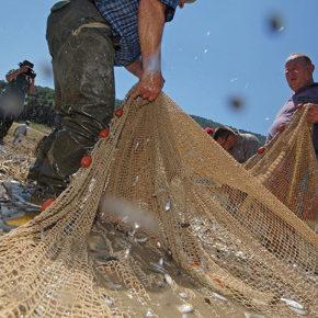 foto 12 290x290 - Reševanje rib na Cerkniškem jezeru