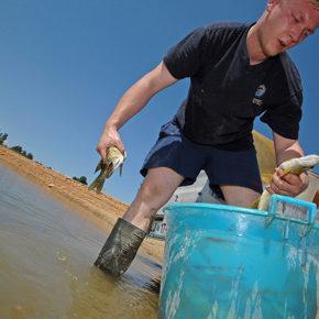 foto 16 290x290 - Reševanje rib na Cerkniškem jezeru