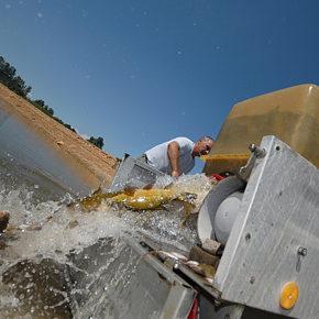 foto 17 290x290 - Reševanje rib na Cerkniškem jezeru