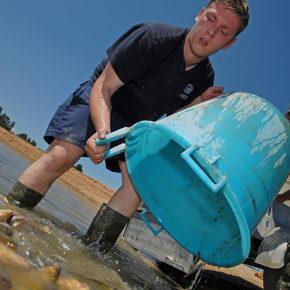 foto 18 290x290 - Reševanje rib na Cerkniškem jezeru