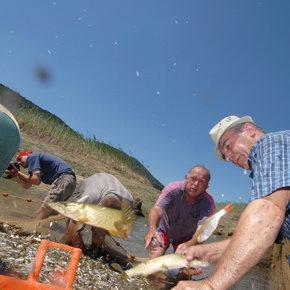 foto 19 290x290 - Reševanje rib na Cerkniškem jezeru