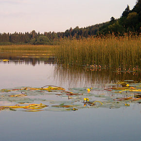 foto 7 290x290 - Photographies from Lake Cerknica