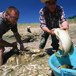 vsebina 1 290x290 - Fish rescuing
