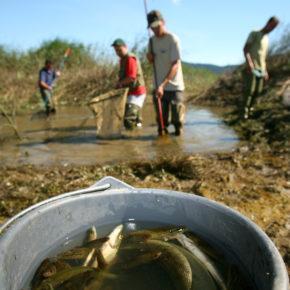 SadLake photoLukaDakskobler 008 1 290x290 - Reševanje rib
