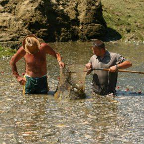 SadLake photoLukaDakskobler 014 1 290x290 - Reševanje rib
