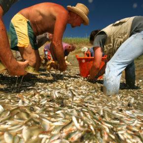 SadLake photoLukaDakskobler 015 1 290x290 - Reševanje rib
