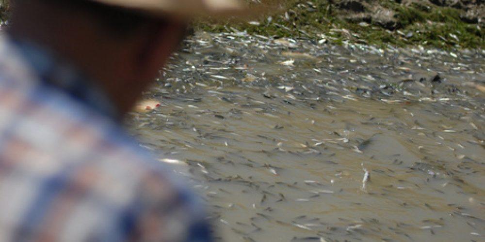 Fish rescuing in Lake Cerknica