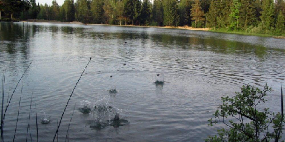 Sanitation of the Lake Bloke – fish, crab and shell settling